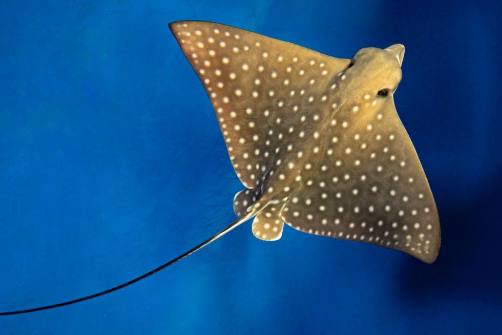 Narodziny wewrocławskim zoo - wszystkie ryby są fascynujące!