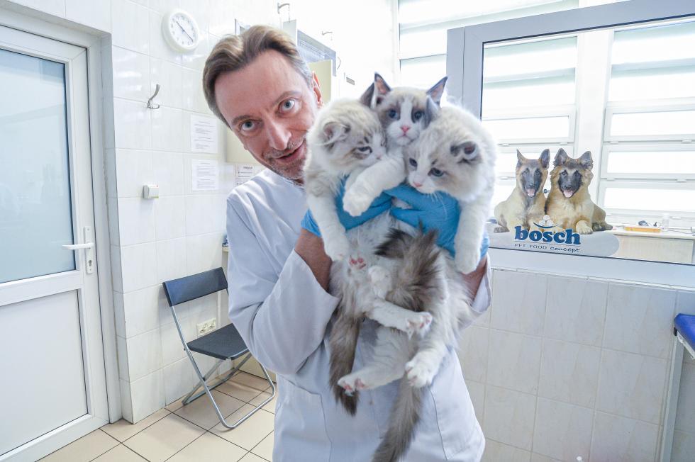 Jedne ryczą, drugie mruczą - 17 lutego światowy dzień kota